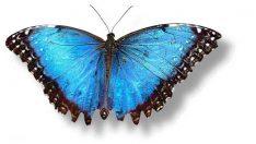 Bitlis'te yeni kelebek türü bulundu