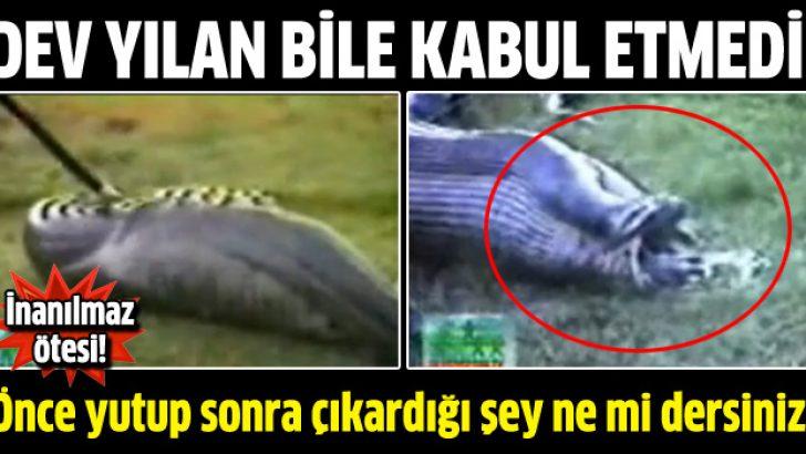 Dev yılan bile kabul etmeyip çıkardı!