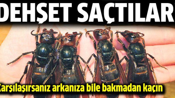Eşek arıları dehşet saçtı!