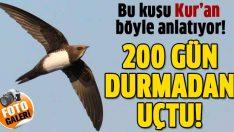 Kur'an o kuşlardan böyle bahsetti