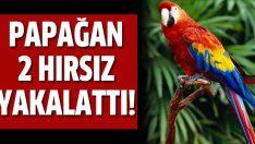 Hırsızları yakalatan papağan!