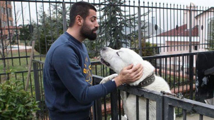 Volkan Demirel'den fotoğraflı köpek açıklaması