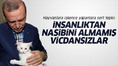 Erdoğan'dan Hayvan Hakları Yasası tepkisi: Cezaları arttırın!