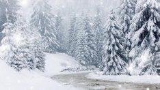 Kocaeli ve Bolu'ya yılın ilk karı yağdı!