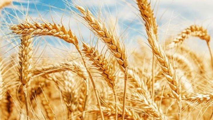 Türkiye, Rusya'dan buğdayı ruble ile alacak