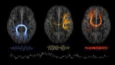 Yeni kimlik doğrulama yöntemi: Beyin dalgaları yeni parmak izimiz olabilir