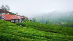 Çay üreticileri seyahat izin belgesi hakkında tüm detaylar!