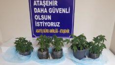 İstanbul Ataşehir'de uyuşturucu operasyonu