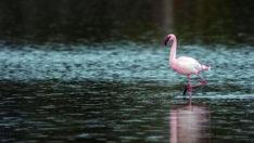Suna kuşu ve flamingo katliamına 13 bin 237 lira ceza