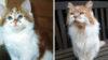 Dünyanın en yaşlı kedisi 31 yaşında öldü